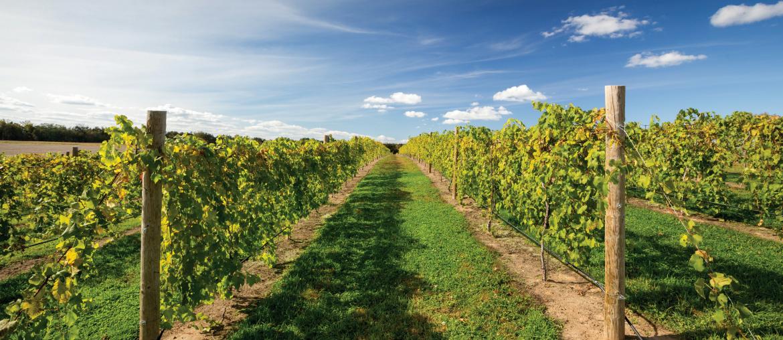 Wine(d)ing Around Wisconsin